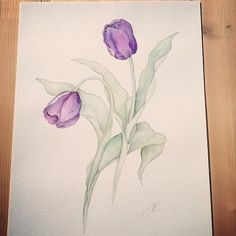Original watercolor on cotton paper 300 gr. portraying Tulips: a flower that expresses sensuality. Measuring about 30x40cm, it is sent along