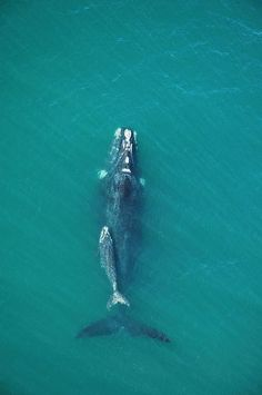 Mommy and baby whale.