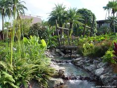 Disney's Polynesian Resort - great site for resort pictures, videos, and reviews