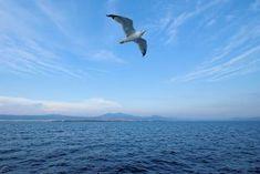 Γλάρος στο Θερμαϊκό. (Αύγουστος 2018) Greece, Bird, Animals, Greece Country, Animales, Animaux, Birds, Animal, Animais