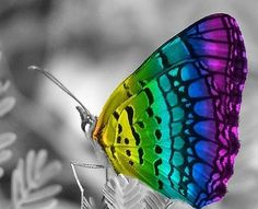 Digital art, rainbow, butterfly on flower. Rainbow Butterfly, Butterfly Kisses, Butterfly Flowers, Butterfly Wings, Butterfly Quotes, Glass Butterfly, Butterfly Painting, Color Splash, Color Pop