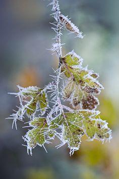 """""""Frosty the leaves"""" by Jacky Parker, via 500px."""
