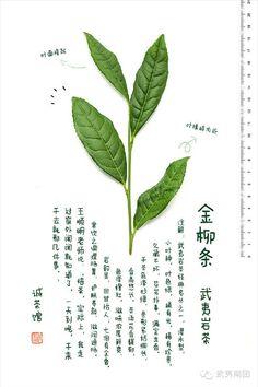 #金柳条 #武夷岩茶 #wuyi #cliff #tea #jinliutiao