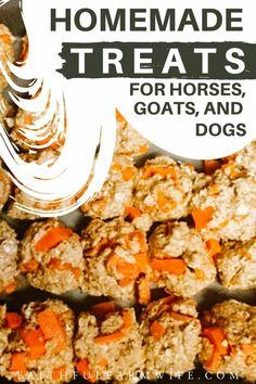 Homemade Horse Treats, Horse Costumes, Horse Grooming, Barrel Horse, Horses And Dogs, Horse Tips, Pet Treats, Horse Care, Yummy Snacks