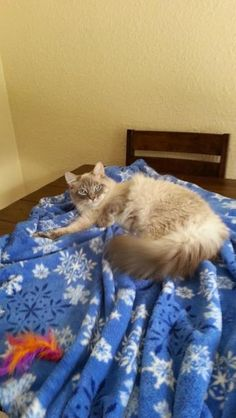 Check out Fuzzy Courtesy Post's profile on AllPaws.com and help him get adopted! Fuzzy Courtesy Post is an adorable Cat that needs a new home. https://www.allpaws.com/adopt-a-cat/himalayan-mix-domestic-long-hair/2714872?social_ref=pinterest