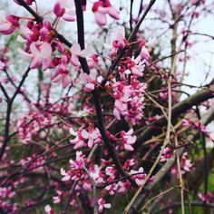Beautiful blooms in Kentucky. #thebotanicallife #plants #botanical #flowers