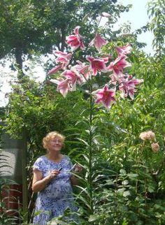 moje maminka s obří lilií (20 pieces)
