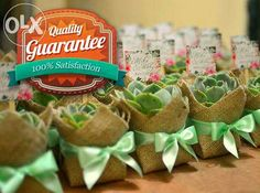 Wedding Souvenirs, Favors, Giveaways made of Succulent Plants For Sale Philippines - Find New and Used Wedding Souvenirs, Favors, Giveaways made of Succulent Plants On OLX