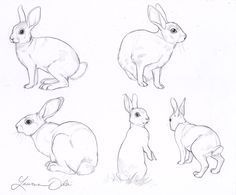 Wild Rabbit Study by DaffoDille                                                                                                                                                                                 More
