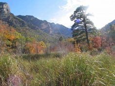 A Rite of Autumn: Fall Colors in McKittrick Canyon | KRTS 93.5 FM Marfa Public Radio