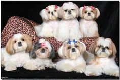 I want all of them!!