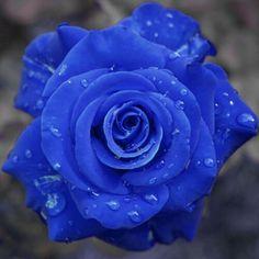 Blume