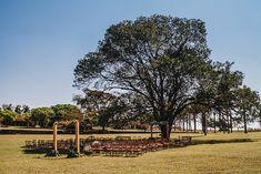 Uma festa em família embaixo da maior árvore do jardim de uma fazenda – Barbara