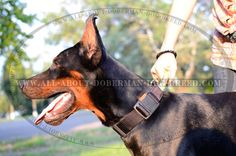 Quick release buckle collar for Doberman