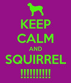 KEEP CALM AND SQUIRREL !!!!!!!!!! - KEEP CALM AND CARRY ON Image Generator - brought to you by the Ministry of Information