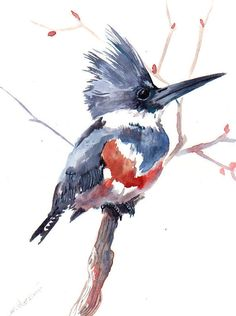 Belted Kingfisher original watercolor painting 12 by ORIGINALONLY