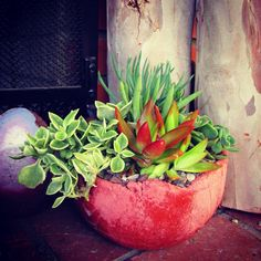 Handcrafted concrete planters crowned with vibrant succulent living arrangements made by ROTDcreations