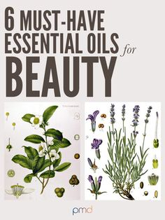 6 Must-Have Essential Oils for Beauty: