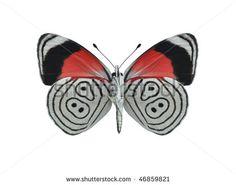 Nymphalidae Fotos, imagens e fotografias Stock | Shutterstock