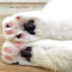 Such pretty paws
