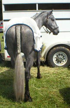Pretty tail braid