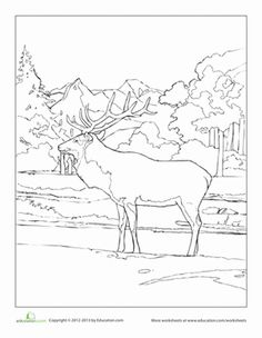 The majestic elk looks so peaceful as he watches over his Rocky Mountain home. Give him some bright forest colors.