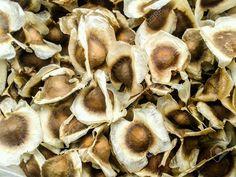 Olio+di+Moringa Superfoods, Stuffed Mushrooms, Vegetables, African, Stuff Mushrooms, Super Foods, Vegetable Recipes, Veggies
