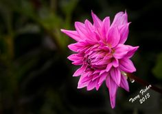 Flowers3-