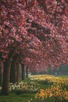 Absolutely beautiful photo of springtime ~ taken in Harrogate, North Yorkshire, England Beautiful World, Beautiful Places, Beautiful Pictures, Beautiful Scenery, North Yorkshire, Yorkshire England, English Countryside, Flowering Trees, Belle Photo