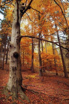 Memory Of The Trees by Jenny Rainbow