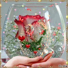 Most popular Picmix [p. 3 on - Most popular Picmix [p. 3 on - Beautiful Nature Pictures, Beautiful Flowers Wallpapers, Beautiful Rose Flowers, Beautiful Flower Arrangements, Beautiful Gif, Amazing Flowers, Rose Flower Wallpaper, Flowers Gif, Love Wallpaper