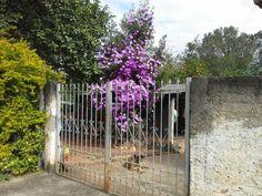 Abra o portão e veja quanta beleza!