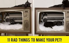 11 Rad Things To Make Your Pet! Thanks @Pablo Ilde Cabeza Lincolne !