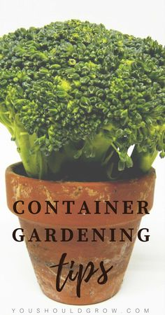 If you love growing food but don't have the space for a large garden, try growing vegetables in containers! Here are some tips for getting the best harvest. Plus great container companion plants for most often grown veggies.