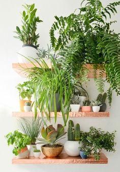 offene Wandregale dekoriert mit pflegeleichten Grünpflanzen