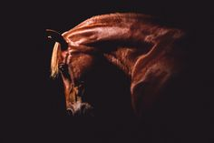 One of a Kind Equine Portraiture – Purple Horse Designs Light Shoot, Black Background Photography, Beautiful Arabian Horses, Images Instagram, Horse Wall Art, Horse Portrait, All The Pretty Horses, Horse Photos, Horse Photography