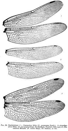 bhris64.png (750×1443)