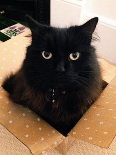 箱に入ってしまう猫たち