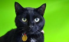 Random Felines: Opt to Adopt - Moses and Abby