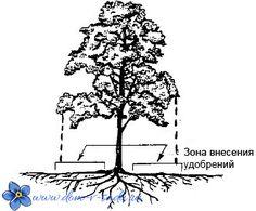 как вносить удобрения под плодовые деревья в саду