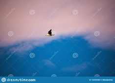 Photo about Saw that seagull at the port of patras trying to teal some fish from the local fishermen. Image of relief, water, road - 134452483