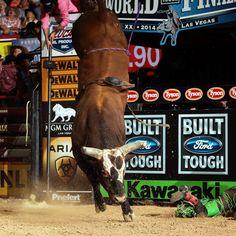 Bushwacker! Greatest buckin' bull ever!