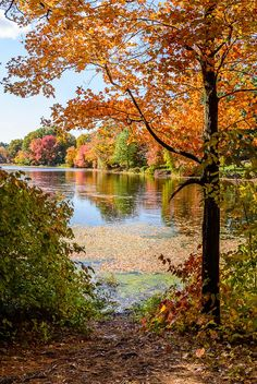 autumn landscape - beautifl fall #tree water river reflection