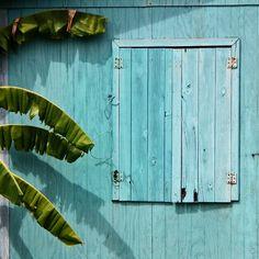 Blue window with banana tree
