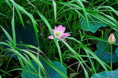 hidden beauty by Tim Ernst on 500px
