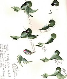 Hummingbird Worksheet - Arts by the Kickapoo