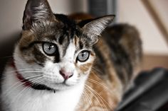 how you can help your cat with a sensitive stomach