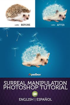 In this surreal manipulation tutorial I will show you how to create a cute hedgehog made of a dandelion. We'll use only two stock images which you can download for free. English and Español