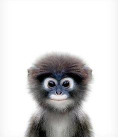 Baby Monkey Print