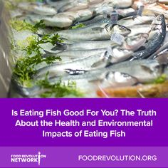 Fish and seafood are often recommended as good sources of healthy nutrients like protein and essential fatty acids. Some research even suggests that fish may he Reasons To Be Vegan, Healthy Living Recipes, Fish Farming, Types Of Fish, Essential Fatty Acids, Health And Wellness, Health Tips, Fish And Seafood, Get Healthy